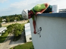 Malba siluety dravce na fasádu