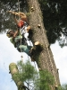 Rizikové kácení stromů