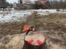 Rizikové kácení stromů v zahradě