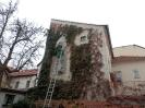 Úprava popínavých rostlin na zdi rodinného domu