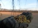 Pyl získaný z jehněd slouží na výrobu léků proti alergii