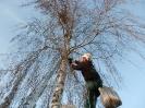 Jehnědy sbíráme ručně bez jakéhokoliv poškození stromu