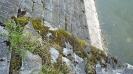 Nejvyšší čas na opravu poškozeného zdiva zarostlého vegetací